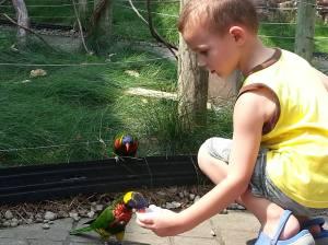 Fed birds