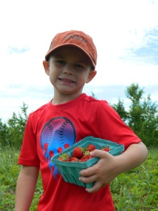 Picked strawberries